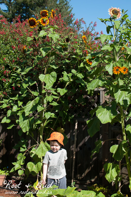 Children never bore, have much to learn, and benefit greatly from growing up in the garden.